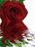 """Раскраска на холсте по номерам """"Роза"""" нумерации красок, контрольный лист, инструкция артикул 8313a."""